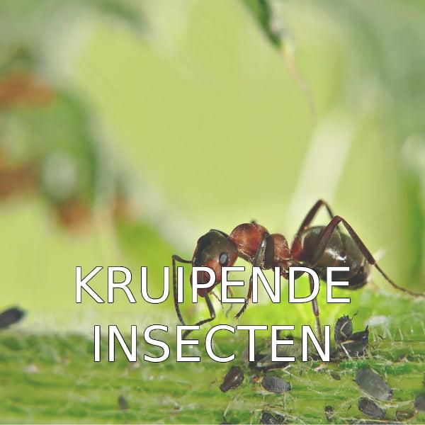 Home kruipende insecten(1)